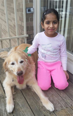 Golden retriever Buddy the therapy dog with his sister Anandi