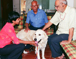 Animal assisted therapy helps adults refocus themselves on their environment; rather than thinking and talking about themselves and their problems, they watch and talk to and about the animals