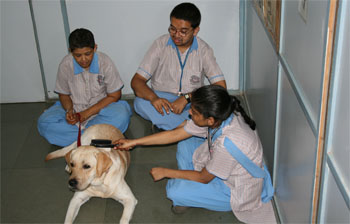 Children interact with therapy dog Bruno at S.P.J. Sadhana School in South Mumbai